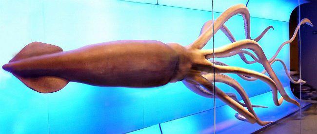 Кракен-большой кальмар