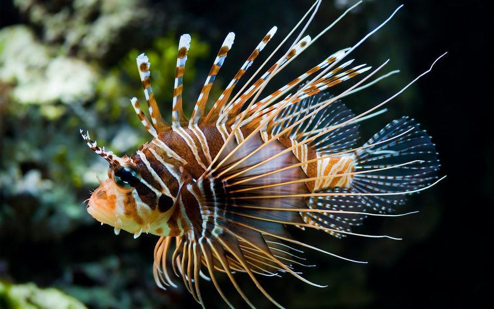 Необычная рыба
