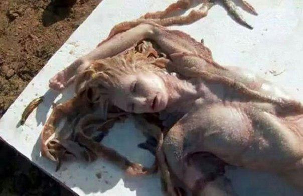 Русалка-найдено тело, очень реалистичное