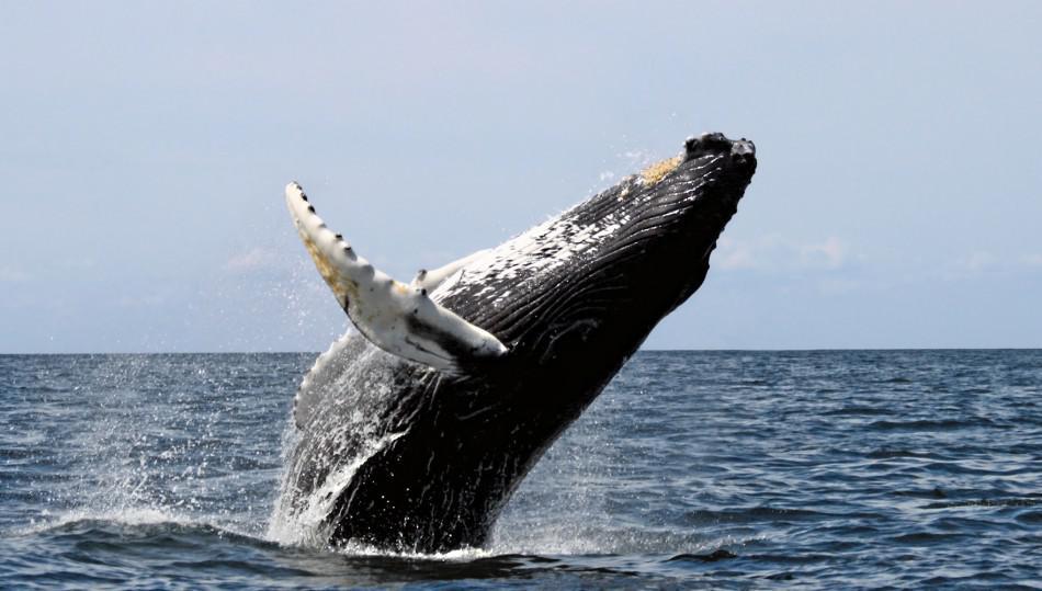 Морские обитатели - кит