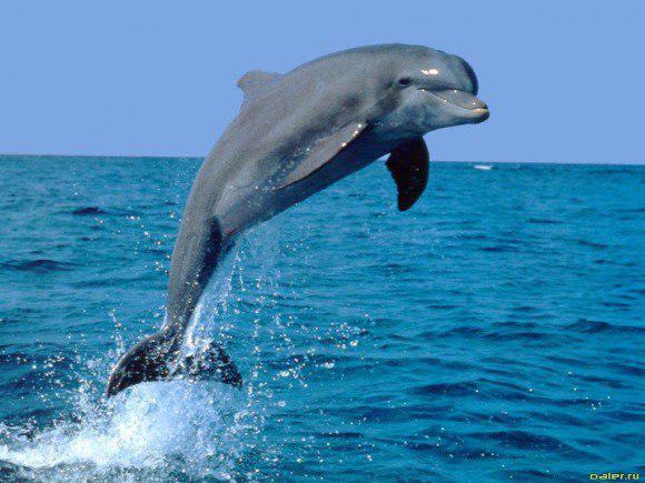 Морские жители-дельфины