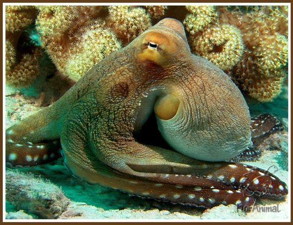 Морские обитатели-осьминог