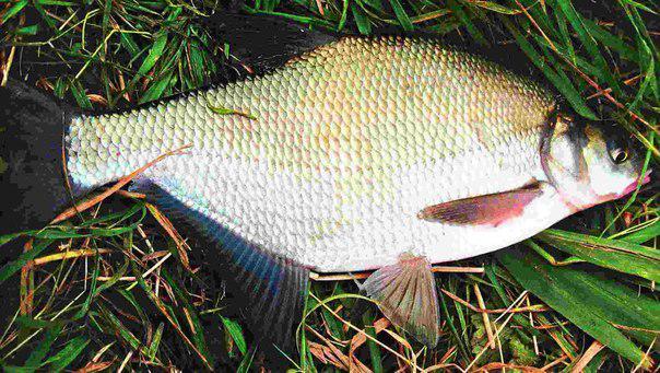 Морские обитатели-рыбы