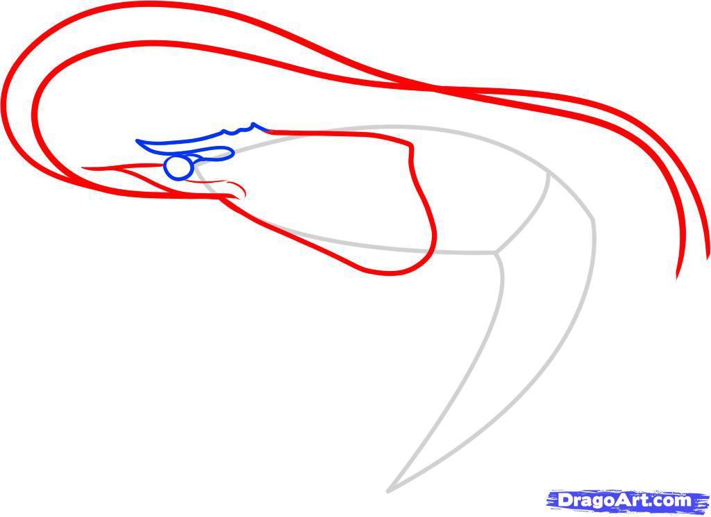 Как нарисовать креветку шаг 4